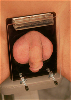 Acrylic Cock and Ball Crusher